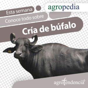 búfalo agropedia