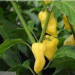 De la pesca a la acuicultura