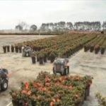 Robots trabajando en el sector agrícola